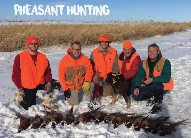 pheasant-hunting-01